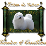 Coton de Tulear, Breeders of Excellence