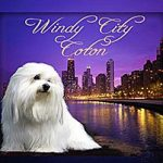 Windy City Coton