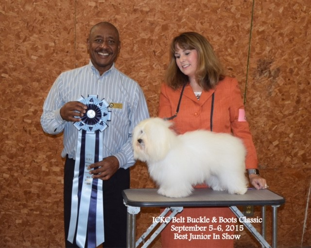ICKC Belt Buckle & Boots Classic, Best Junio Shiloh coton in Show