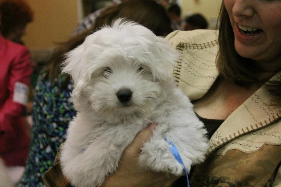 Young lady holding a Shiloh Coton dog